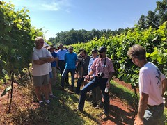 IMG_0796 (UGA CAES/Extension) Tags: cainhickey stonepilevineyard habershamwinery viticulture vineyard winegrapes wine viticultureteam northgeorgiavineyards