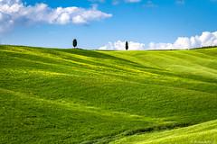 val d'Orcia-037 (bonacherajf) Tags: italia italie valdorcia toscane tuscany cypress cyprés green vert