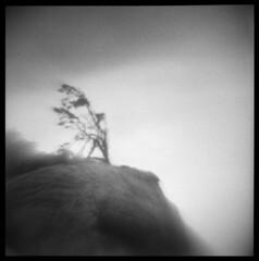 Beach One #3 (LowerDarnley) Tags: agfaisoly modifiedcamera flippedlens transplantedlens holgalens olympicpeninsula washington northwest coast beachone tree windswept cliff bluff
