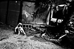 Stray Life.... (Victor Borst) Tags: street streetphotography streetlife reallife real realpeople asia asian asians candid travel travelling trip traffic cats cat kitten pussy pussies stray blackandwhite bw mono monotone monochrome osaka shinimamiya poverty povert urban urbanroots urbanjungle fuji fujifilm xpro2 city cityscape citylife