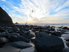 Arch Cape Sunset (altfelix11) Tags: oregon archcape clatsopcounty beach sunset sky clouds ocean pacificocean castlerock gull bird