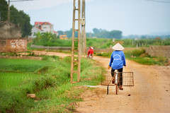 Farmer bicycling down a gravel road in Vietnam (BryonLippincott) Tags: vietnam vietnamese vietnameseculture asia southeastasia countryside country hanoi rural agriculture farm farming ruralscene farmscene farmland mountains fog haze houses industry production community fields landscape rurallandscape bicycle biking riding pedaling trees bluesky clouds rife paddy ricepaddy gravelroad baskets hat vietnamesehat