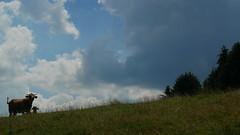 (Knipser85) Tags: panasonic lumix gx80 gx85 landscape