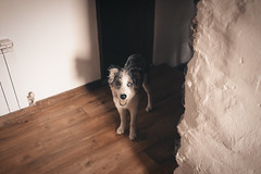 brotes verdes (claudi lopez) Tags: documentary documentaryphotography photo photography people music musician home house pirineos mountain rural recording friends dog week portrait coffe