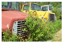 four trucks (mcfcrandall) Tags: vehicles rust abandoned rusty old broken parked overgrown mcleansautowreckers mcleans weeds green