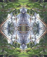 Webbed (rhonda_lansky) Tags: nature garden writing poems poem shortstories spider web eye lansky rhondalansky mirror mirrored mirrorart flip flipped flippedart symmetrical symmetry mirrormade microsoftpaint michigan symmetricalart surreal plants wood grass green