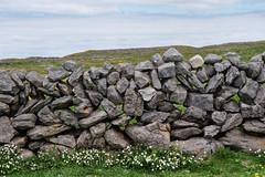 Burren stone wall (Astaken) Tags: olympus omd em5 43 lens zuiko digital zd ed swd 1260mm