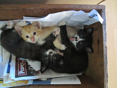 Box of kittens (Seamingly Simple) Tags: kittens napping box