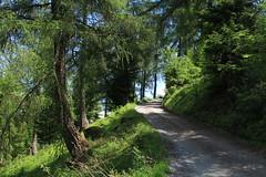 Ovronnaz (bulbocode909) Tags: valais suisse ovronnaz montagnes nature forêts arbres mélèzes chemins printemps vert troncs