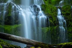 Verdant Veils (TierraCosmos) Tags: waterfall lowerproxyfalls falls proxyfalls moss green verdant veils oregon centraloregon fallingwater