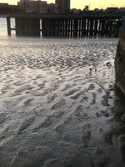 Thames goose family footprints (Inkysloth) Tags: thames river riverthames london walk sunset se18 woolwich bird waterbird londonwildlife