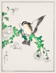 Narcissus Flycatcher and Chrysanthemum illustration from Pictorial Monograph of Birds (1885) by Numata Kashu (1838-1901). Digitally enhanced from our own original edition. (Free Public Domain Illustrations by rawpixel) Tags: flycatcher antique asia asian bird chrysanthemum drawing graphic illustrated illustration japan japanese monograph name narcissus numatakashu old pictorial pictorialmonographofbirds print publicdomain shuchogafu vintage watercolor woodblock