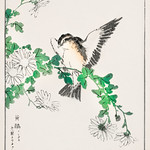 Narcissus Flycatcher and Chrysanthemum illustration from Pictorial Monograph of Birds (1885) by Numata Kashu (1838-1901). Digitally enhanced from our own original edition. thumbnail
