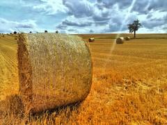 In the summertime.... (Tobi_2008) Tags: heu hay acker field landschaft landscape natur nature sachsen saxony deutschland germany allemagne germania