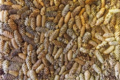 pinecones (Dmitry Karyshev) Tags: живагаснт moskovskayaoblast russia ru backgrounds closeup pattern nature brown animal macro material textured food abstract nopeople everypixel pinecones karyshev canon 5dmiv