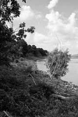 DMAFR Day 3 (6) (momentspause) Tags: mississippiriver roadtrip riverbank blackandwhite bw blackandwhitephotography canon5dmkiii canonef50mmf18 niftyfifty trees clouds river