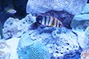 IMG_0081 (jmac33208) Tags: mystic aquarium connecticut fish