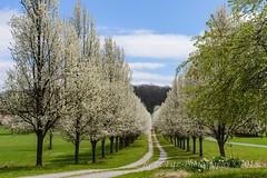 Along Adams County Roads (kevnkc2) Tags: stdntsdoncooper lightroom pennsylvania spring nikon d610 adams county tamron 2470mmg2 sp2470mmf28divcusdg2a032