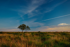 *** (Lee|Ratters) Tags: sony a7 fe sel2870 hitech blackdown somerset sunrise lonetree