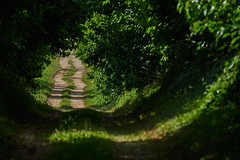 Fontanabona (paolo-p) Tags: alberi trees linee lines ombre shadows fontanabona pagnacco