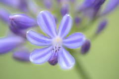 Blumen gehen immer (mkniebes) Tags: flower nature bokeh botanischergarten closeup summer bokehlicious dof bochum makroplanar2100 zeiss zf2