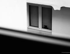 Teddy bear (frankdorgathen) Tags: sony minimalistic minimalism monochrome blackandwhite schwarzweiss schwarzweis fenster window wand wall haus house