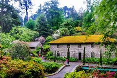 Millhouse (Tony Shertila) Tags: talycafn wales unitedkingdom europe britain badnant nationaltrust gardens conway garden building mill tree