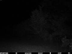 2018-06-24 05:21:57 - Crystal Creek 2 (Crystal Creek Bowhunting) Tags: crystal creek bowhunting trail cam