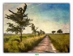 POLDERLANDSCAHP van WEST-VLAANDEREN // DE MOEREN (régisa) Tags: arbre piste track demoeren westvlaanderen flandre occidentale belgique belgië noordmoerstraat polderlandschap