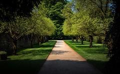 Light and shade (Phil-Gregory) Tags: hardwickhall bolsover nikon d7200 sigma18250macro sigma green light shade shadow england scenicsnotjustlandscapes trees