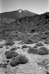 . (mboujong) Tags: black white spain tenerife teide national park zeiss ikon zi biogon zm 35 2 agfaphoto apx 400 tetenal ultrafin canon canoscan 8800f