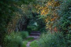 Sunday Walk (ian._harris) Tags: nikon naturaleza d7200 nature tamron sunday july naturephotography natural fowlmere flickr