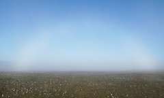 Fogbow (l4ts) Tags: landscape derbyshire peakdistrict darkpeak mist fog fogbow cottongrass bleaklow doctorsgate romanroad