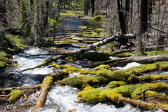 The river is born at the springs (rozoneill) Tags: boundary springs upper rogue river crater lake national park siskiyou forest oregon hiking diamond cascades mountains west