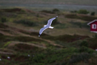 Flight in the evening / Langeoog