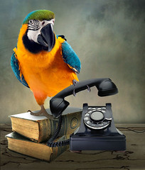 Macaw (jaci XIII) Tags: arara pássaro animal papagaio telefone macaw parrot bird phone