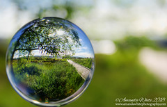 Along the Boardwalk (sminky_pinky100 (In and Out)) Tags: easternpassage canada lensball glassball crystalball boardwalk travel tourism scenic green bokeh refraction pretty landscape abstract atlanticcanada maritimeprovinces cans2s omot outside novascotia