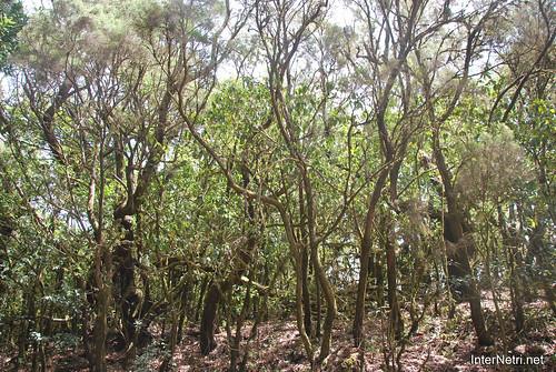 Національний парк Гарахонай, Гомера, Канарські острови  InterNetri  0694