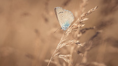 Hot day (Unicorn.mod) Tags: 2018 colors nature summer butterfly hotday macro canoneos6d canonef100mm28lisusm canon