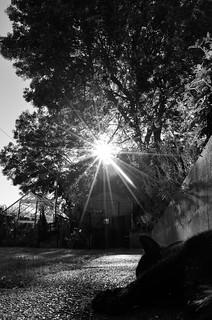 P52 Week 27 | Sunburst
