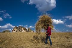 Alınteri (hilmi_cskn) Tags: farmer clouds cloud sky sun work worker working olympus outdoor omd olympustürkiye olympuseuropa olympususa olympusturkiye mzuiko1240 m43 m43turkiye