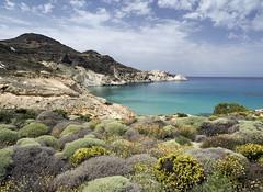 (kekyrex) Tags: greece milos kikladhes cyclades isolecicladi cicladi beaches mare herbs aegean greekislands paradise