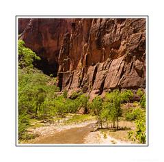 The Little River That Carved a Canyon (JohnKuriyan) Tags: utah virginriver zioncanyonnationalpark