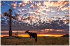 Viewing the sunrise (Stefan A. Schmidt) Tags: warstein nordrheinwestfalen deutschland de pentaxart sonnenaufgang ziege ziegen kreuz wolken