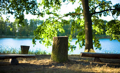 chill (Rene_1985) Tags: leica 50mm 095 noctilux sl nature sun shadow wood lake wasser see baumstumpf cutted tree view aussicht bokeh