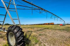 RR-20180710-BrushSub-113-e (skyviewtim) Tags: bnsf5667 coalload coloradorailroads coloradotrains irrigator messex merino colorado unitedstates us