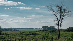 Pipestone National Monument (Lizzy Anderson Photography) Tags: pipestone minnesota unitedstates us winnewissafalls winnewissa pipestonenationalmonument park prairie plain landscape overlook view grass tallgrass tree woods forest