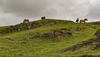 Icelandic Horses on the ridge north of Flúðir