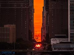 Manhattanhenge 2018 (Brian D' Rozario) Tags: brian19869 briandrozario nikon d750 70300mm telephoto bigapple manhattan nyc ny newyorkcity newyork sunset orange city skyscraper 42ndstreet tudorcity summer sun setting horizon fireball astronomical brighteststar sky streets citylife chryslerbuilding timessquare