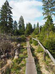 Pfad um den Oderteich (Harz) (A.Dragonheart) Tags: landschaft landscape natur nature outdoor oderteich harz weg pfad path way wald forest baum tree holz wood